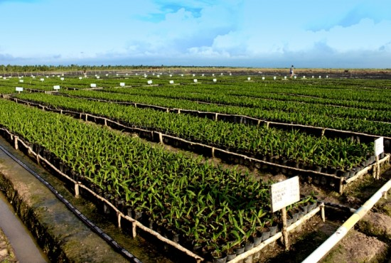 5.712 Hektare Kebun Sawit Plasma Untuk Masyarakat